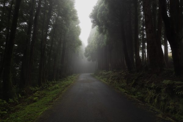 Foggy Azores